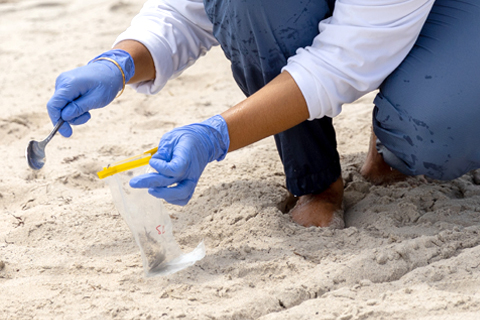 Researcher collecting sand samples
